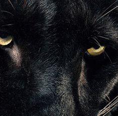Image about black in creatures by ❅ cleveri Black Panther Marvel, Film Black Panther, Black Panthers, Skyrim, Wakanda Marvel, Aomine Kuroko, Erik Killmonger, Takashi Shirogane, Avengers