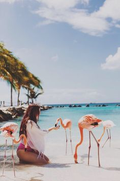 Hand feeding wild flamingos in nature on island paradise like hawaii on the sand of a sea beach ocean in summer sun fun The Beach, Beach Bum, Summer Beach, Summer Fun, Sunny Beach, Summer Dream, Pink Summer, Style Summer, Summer Vibes