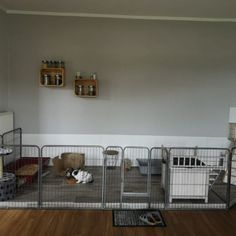 The New Classiest Trend in Dog Housing Diy Bunny Cage, Diy Guinea Pig Cage, Bunny Cages, Rabbit Cages, House Rabbit, Pet Rabbit, Guinea Pigs, Indoor Bunny House, Indoor Rabbit Cage