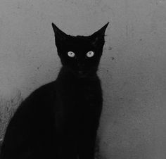 love me black cats