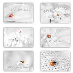 6 photos coccinelles rouges sur fond gris perle - fine art photo nature : Photos par couleurs-nature-deco