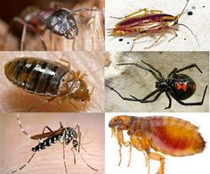 O'Connor Pest Control Visalia will put an iron curtain of defense around the base of your home that ants, spiders, earwigs, beetles, and other bugs just won't cross. We will also inspect other potential problem areas and seal them off so your home in Visalia will be pest free forever. We offer one-time or recurring, bi-monthly check-ins for your pest control, inspections and treatment needs in Visalia. We will work within your budget to make sure your pest issues are resolved.