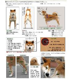 Aaaaand perhaps someday I will figure out how to read this. Japanese Dog Breeds, Japanese Dogs, Shiba Inu, Akita, Nihon, Pitbull Terrier, Doge, Bellisima, Best Dogs