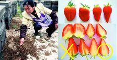 太可怕了!這樣的草莓你敢吃嗎