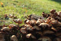 Autumn mushrooms #photography #art #outside #nature #mushrooms #autumn