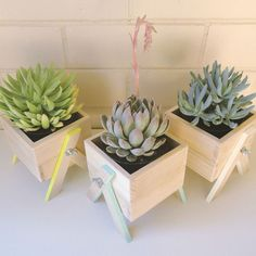 Have your own little box of greenery indoors!These miniature planter boxes have been carefully handmade from sustainably grown Tasmanian Oak. Each box comes with hand-painted legs to add a subtle pop of colour to compliment your living or work area.Perfect for city spaces, window sills, undercover balconies or just bringing the outdoors in. Size of the box is 8cm (h) x 10.5cm (w), total height is 12cmSuitable for small succulents or cactus varieties - included is a small...