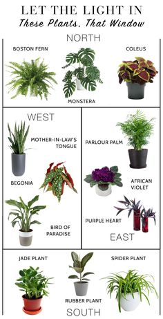 We need a li'l green indoors & easy houseplants = the answer. We're talking sunlight exposure, terrariums, greenhouses, snake plants.let the outdoors in! House Plants Decor, Plant Decor, Best Indoor Plants, Indoor Garden, Household Plants, Decoration Plante, Inside Plants, Pot Plante, Jade Plants