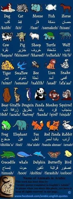 Arabic Alphabet For Kids, Learning The Alphabet, Arabic Phrases, Arabic Words, English Phrases, Learn English Words, Spoken Arabic, Learn Arabic Online, Arabic Lessons
