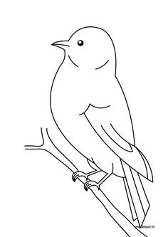 bird coloring page - Google Search