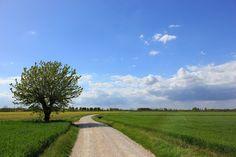 Italy, Landscape, Nature, Tree, Field, Sky #italy, #landscape, #nature, #tree, #field, #sky