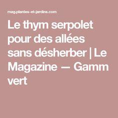 Le thym serpolet pour des allées sans désherber | Le Magazine — Gamm vert