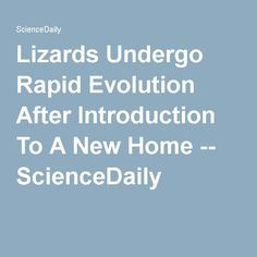 Lizards Undergo Rapid Evolution After Introduction To A New Home -- ScienceDaily