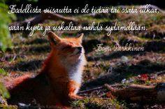 todellistaviisautta-runokuva-tomiparkkinen Finnish Words, Boho Beautiful, Mood Quotes, New Life, Bff, Thoughts, Sayings, My Love, Animals
