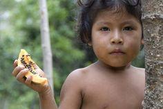 Brazilian Tribe Threatened as Illegal Loggers Stay Put - Awa girl eats papaya