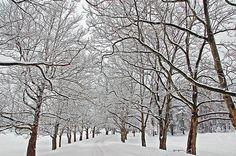 Snowy Treeline Photograph Photography by Aimee L Maher http://aimee-maher.artistwebsites.com/featured/snowy-treeline-aimee-l-maher.html