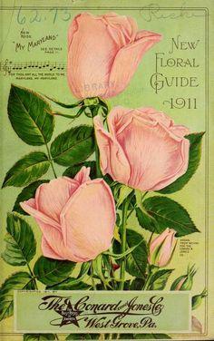 Vintage Labels, Vintage Cards, Vintage Postcards, Vintage Images, Vintage Magazines, Garden Catalogs, Seed Catalogs, Decoupage Tins, Seed Art