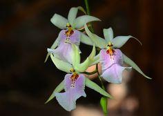 Devonian-Botanical-Garden-flowers.jpg (913×653)