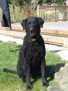 Tweed 2005