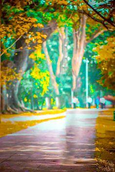Nature Background Images, Desktop Background Pictures, Photography Studio Background, Photo Background Editor, Blurred Background, Photo Backgrounds, Htc Wallpaper, Green Screen Video Backgrounds, Picsart Background