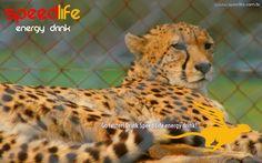 Speed Life Cheetah