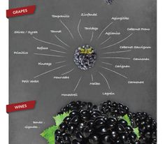 Aroma: Blackberry