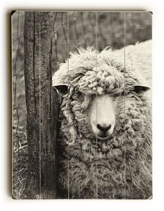 Ready to hang wood panel, Sheep photography, Black and White photo, wooden sign, wall hanging, wall decor, panel art, wood panel, home decor