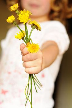 When my daughter was about this age, she would bring me these & got upset whenever the flowers turned to seeds .