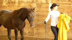 in hand trail Canadian Horse, Black Canadians, Horses For Sale, Horse Riding, Trail, Ranch, Hiking, Camping, Animals