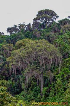 Green Areas, National Parks & Sanctuaries – Máncora Perú – Hoteles, Casas de…