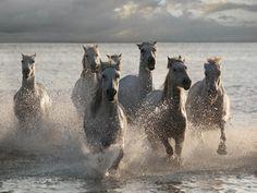 jorge-llovet-horses-landing-at-the-beach.jpg (400×300)