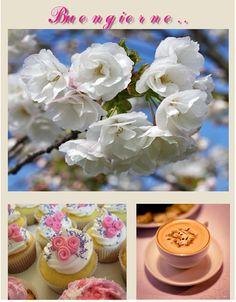 #buongiorno #colazione #dolci #caffè #fiori #primavera  #goodmorning #breakfast #sweet #coffee #flowers #spring