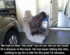 """We had to take ""his seat"" out of our van so we could fit a dresser in the back. He has been sitting like this, waiting to go for a ride for the past 15 minutes."""