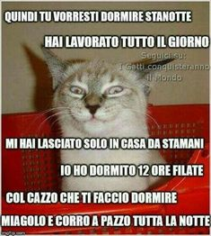 Vaccate per Ridere Trash 448996 Funny Video Memes, Funny Jokes, Cute Funny Animals, Funny Cats, Funny Images, Funny Photos, Celebrities With Cats, Cat Pose, Pokemon