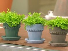Milk Paint Terra-Cotta Pots Videos | Crafts How to's and ideas | Martha Stewart