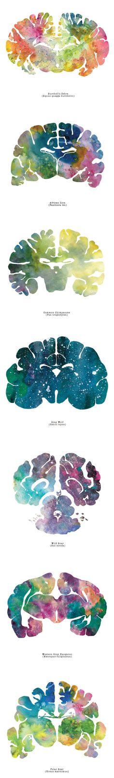 Artist watercolors animal brain scans. Simply stunning!