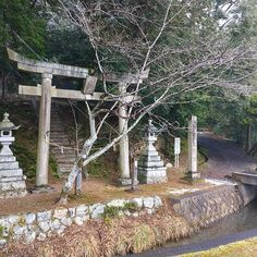 【britishgaijin】さんのInstagramの写真をピンしています。《I liked the feel of this shrine as it has a stream running by it and I had to cross a bridge to reach the main entrance. This shrine looks fairly old and it has a huge ancient tree that has grown at an angle which makes it lean above the stairs that leads you to the Haiden (worship hall). This site has a 'glowing' feel from all the green moss that has spread over the ground, brickwork and statues. All of these things add to the character of this shrine…