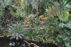 De Orchideeën Hoeve - Flip - Picasa Webalbums