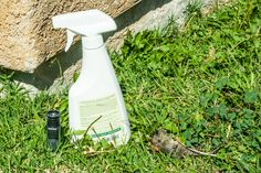 Homemade Rat and Mice Spray Repellent