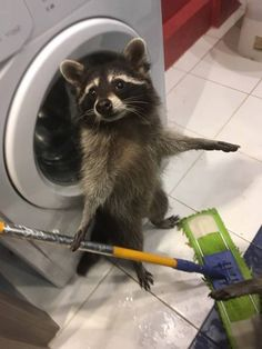 We can not really explain these bizarre animal photos - Animals Pictures Cute Little Animals, Cute Funny Animals, Funny Animal Pictures, Baby Raccoon, Racoon, Bizarre Animals, Animals And Pets, Le Zoo, Rottweiler