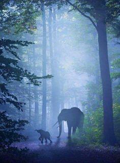 Animals 🙈 - Animals, animals wild, animals funny, animals cutest, animals and pets Animals And Pets, Baby Animals, Cute Animals, Baby Elephants, Wild Animals, Elephants Playing, Beautiful Creatures, Animals Beautiful, Elephas Maximus