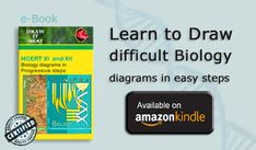 Draw it neat- School biology: Biology diagrams in progressive steps .As per NCERT,CBSE, Matric syllabus (Basic human organ diagrams Book Plasma Membrane, Cell Membrane, Typical Plant Cell, Heart Anatomy Drawing, Draw A Hexagon, Heart Diagram, Human Digestive System, Animal Cell, Heart And Lungs