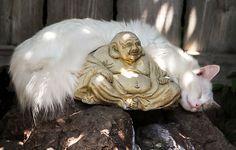 Zen Kitten