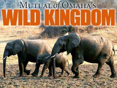 Wild Kingdom * Television show that featured wildlife and nature and is credits for increasing ecological awareness in the U.S.
