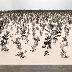 20,000 Steel Flowers Etched From Botanical Drawings!   Click on the picture and find the site to see this from the other side,,,you will be amazed!