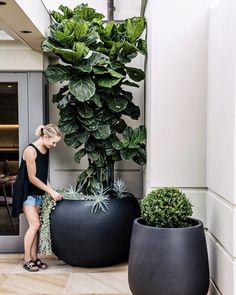 Hey everyone! landscape design These landscape garden are perfect for thelandscape design, landscape design front of house, landscape design plans, landscape design backyard, landscape design ideas so you need to try them out! Outdoor Plants, Outdoor Gardens, Indoor Outdoor, Pots For Plants, Indoor Hanging Plants, Ficus Tree Indoor, Indoor Plant Pots, Landscape Design Plans, Garden Art