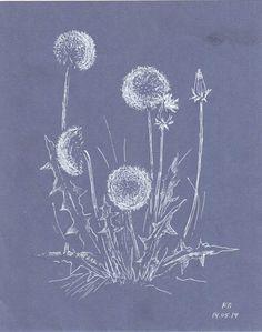 dandelions by korneva violetta