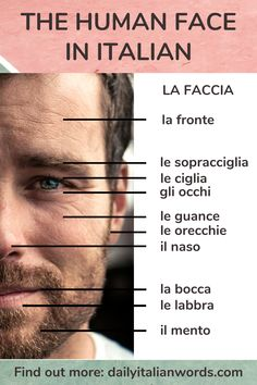 Here are the parts of the human face in the Italian language. Find out more about the word for face (faccia) on dailyitalianwords.com! #italian #italiano #italianlanguage #italianlessons Italian Grammar, Italian Vocabulary, Italian Phrases, Italian Words, Italian Language, Korean Language, Japanese Language, Italian Lessons, French Lessons