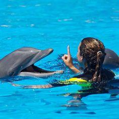 Nadar con Delfines (Portugal) - Aladinia