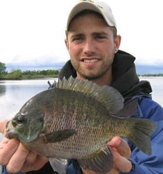 Big bluegills on the fly - what could get much better than that!