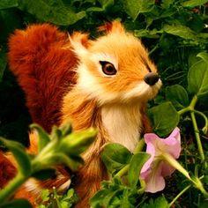 Squirrel  Rezvan Irani